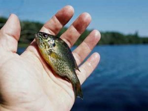 Tiny Fish in Hand